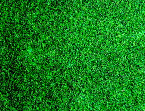 Four More Exciting Uses for Artificial Grass
